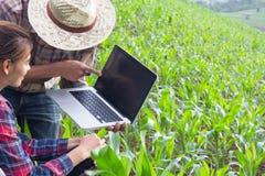 Завод Agronomist рассматривая в кукурузном поле, фермере пар и res стоковое фото