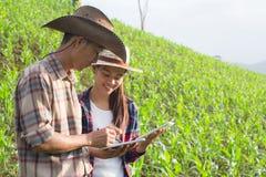 Завод Agronomist рассматривая в кукурузном поле, фермере пар и res стоковые изображения