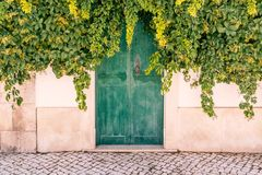 Завод Elderberry покрывая деревянную зеленую дверь Стоковая Фотография RF