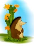 завод hedgehog кактуса Стоковая Фотография