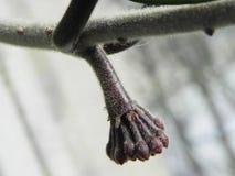 Завод Hoya цвести свои цветки Красивые заводы и яркие цветки o стоковые фотографии rf