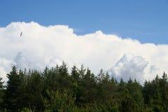 заволакивает небо пущи Стоковое Фото