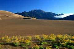 заволакивает солнцецветы горы дюн Стоковые Фото