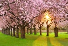 завораживающее весеннее время пейзажа Стоковое Изображение