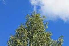 заволакивает лето неба Стоковое Изображение RF