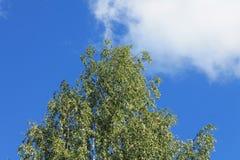 заволакивает лето неба Стоковая Фотография