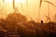 заволакивает небо природы озера Стоковое фото RF