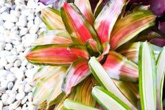 Завод ананаса. Стоковое Фото