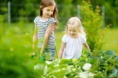 2 завода и цветки прелестных девушек моча Стоковые Изображения