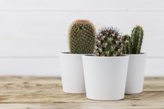 3 завода кактуса в белых баках Стоковые Фотографии RF