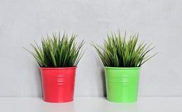 2 завода травы в красных баках Стоковая Фотография RF
