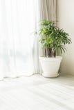 Завод вазы Стоковая Фотография RF