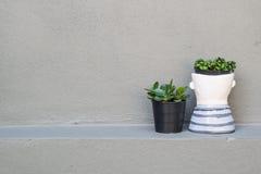 Завод в вазе на серой стене Стоковые Изображения RF