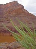 Завод в гранд-каньоне Стоковое фото RF