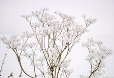 Завод в снежке Стоковое Фото