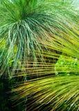 Завод дерева зеленой травы Стоковая Фотография RF