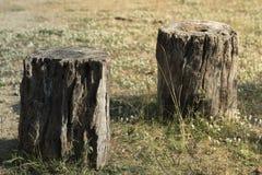 Завод дерева пня на зеленой траве Стоковая Фотография RF