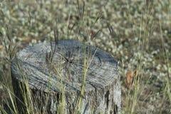 Завод дерева пня на зеленой траве Стоковые Фотографии RF