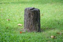 Завод дерева пня Стоковые Изображения RF
