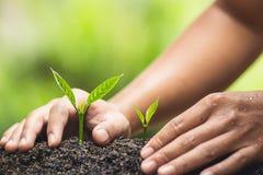 Завод, дерево, засаживая, жизнь, земледелие, окружающая среда, предпосылка, новый, зеленая, природа, растя, концепция, руки, раст Стоковые Фотографии RF
