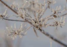 Завод зимы Стоковая Фотография RF