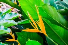 Завод листвы Стоковые Изображения RF