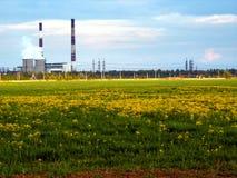 Завод и зеленое поле Стоковые Изображения