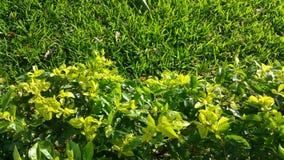 Завод и трава Стоковые Изображения