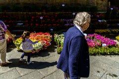 Завод и уличный рынок цветков в деревне Pienza Стоковое Фото