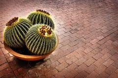 Завод кактуса в горшке на патио дома Стоковые Изображения