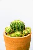 Завод кактуса в цветочном горшке, вертикальной съемке Стоковые Фото