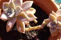 Завод кактуса подробно от сада Стоковые Изображения