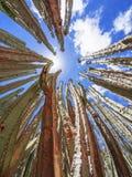 Завод кактуса Стоковые Изображения RF