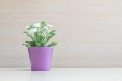Завод крупного плана искусственный с белым цветком на фиолетовом баке на запачканных деревянных столе и стене текстурировал предп Стоковая Фотография RF