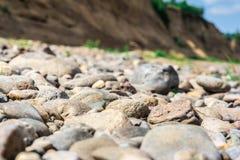 Завод между камнями Стоковое Изображение