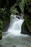 Заволоките лес, Mindo, эквадор, джунгли Тихоокеанского побережья, джунгли Тихий Океан Эквадорца Стоковая Фотография RF