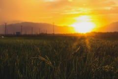 Заволокли заход солнца неба оранжевый с зеленым полем Стоковые Фото