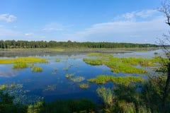 Заволокли утро на болоте с отражением голубого неба Стоковое Изображение RF