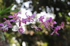 Завод орхидеи Стоковая Фотография