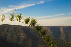 Завод перед взглядом панорамы каньона Стоковые Изображения