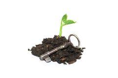 Завод растет от кучи почвы и старого ключа на белом backg Стоковые Фотографии RF