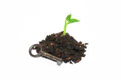 Завод растет от кучи почвы и старого ключа на белом backg Стоковое Изображение