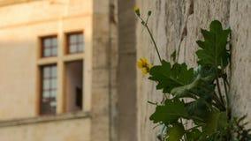 Завод растя от каменной стены стоковые изображения rf