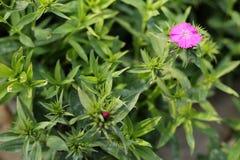 Завод цветка бабочки в саде Стоковое Фото
