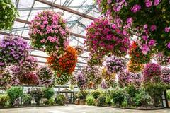 Завод цветка Стоковое Изображение