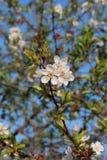Заводы весны Стоковая Фотография RF
