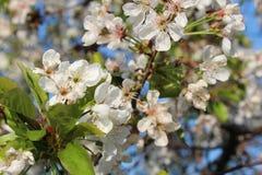 Заводы весны Стоковые Фото