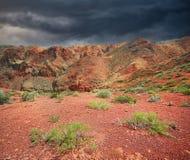 Заводы в красной пустыне стоковые изображения rf
