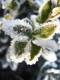 Заводы в снеге Стоковое Изображение