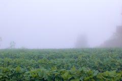 Заводы в тумане Стоковое Изображение